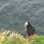 Die Westfjorde Teil 2 (17. Juli)