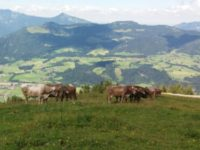Rauf und runter immer munter. Die Besteigung des Unterberghorn (7. August)
