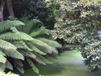 Lost Gardens of Heligan (17. August)